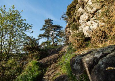 Lande de Pen Mur - Muzillac ( Morbihan)