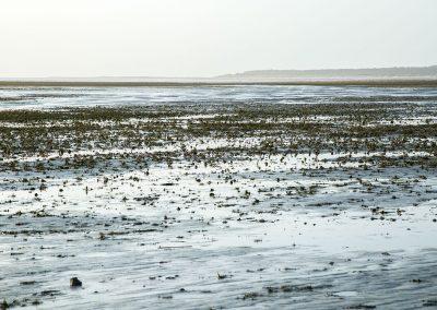 Saint-Firmin les Crotoy - Baie de Somme -Réserve naturelle (80)