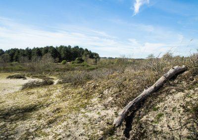 Dunes du Parc Ornithologique du Marquenterre - Saint Quentin en Tourmont - (80)